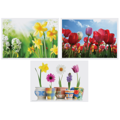 10 in x 14 in Seasonal Multipack Variety Pack Placemats 1000 ct.
