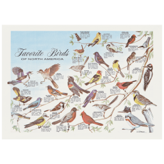 10 in x 14 in Favorite Birds Paper Placemats 1000 ct.